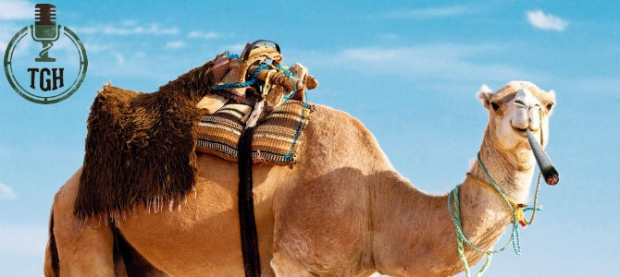 Smoking Camels In The Hot Sun